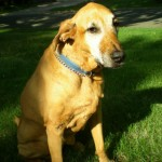 how-my-old-dog-taught-me-to-age-gracefully