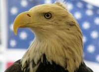 hanging_out_with_eagles